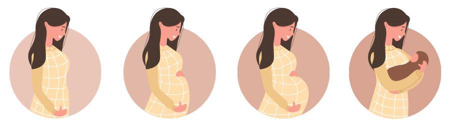 etapas da gestação pré-natal